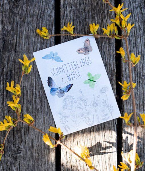 Schmetterlingswiese Margreblue